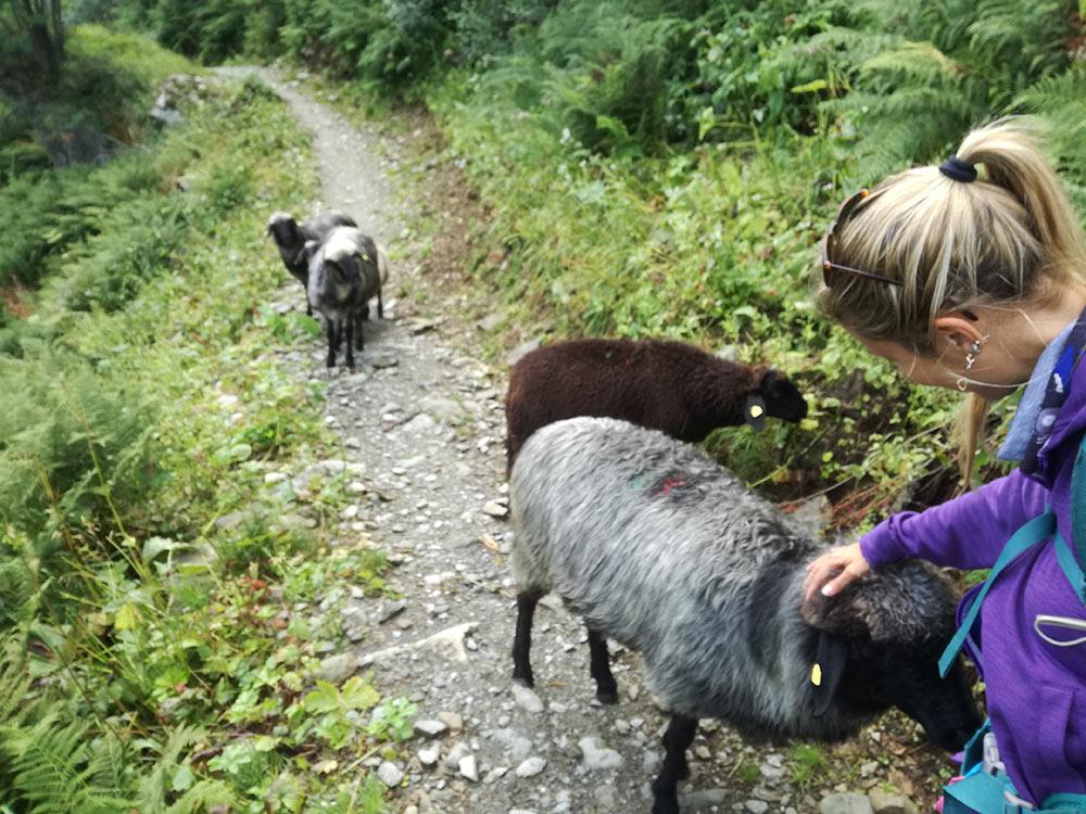 Traversata Carnica Silvia e le pecore
