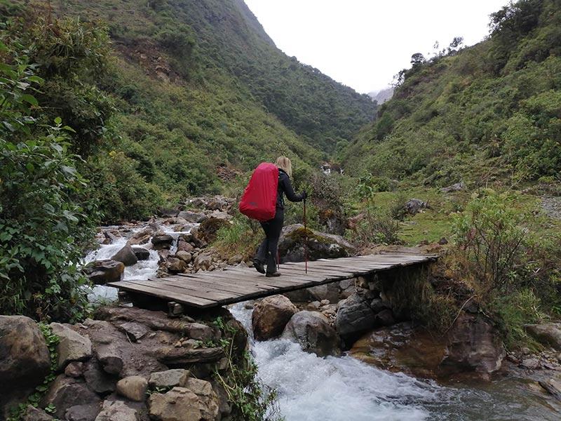 Un ponte nella giungla