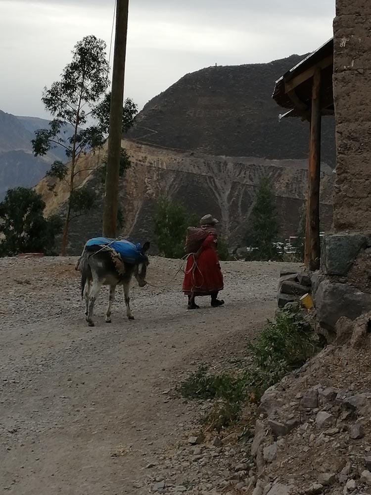 Signora e mulo sulle Ande