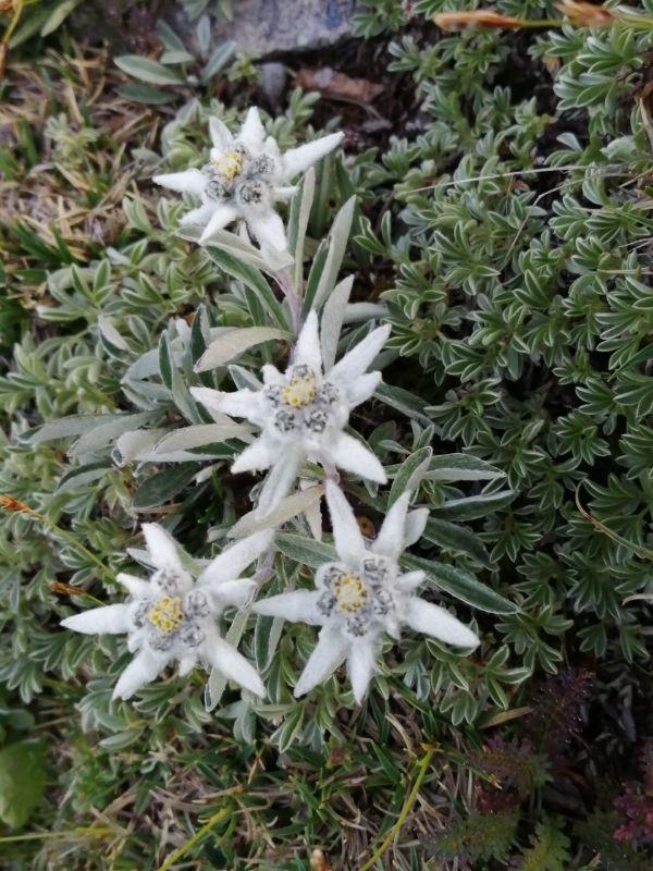 stelle alpine sul Latemar