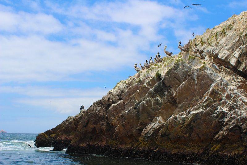 Paracas- Isole Ballestas