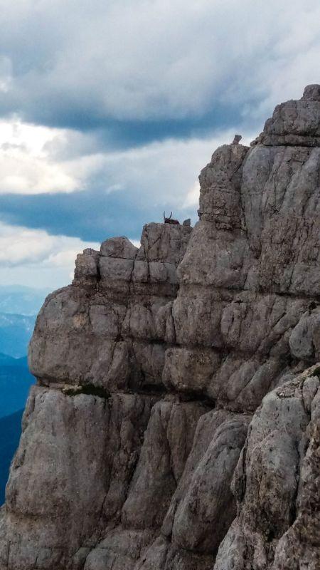 stambecco adulto tra le rocce