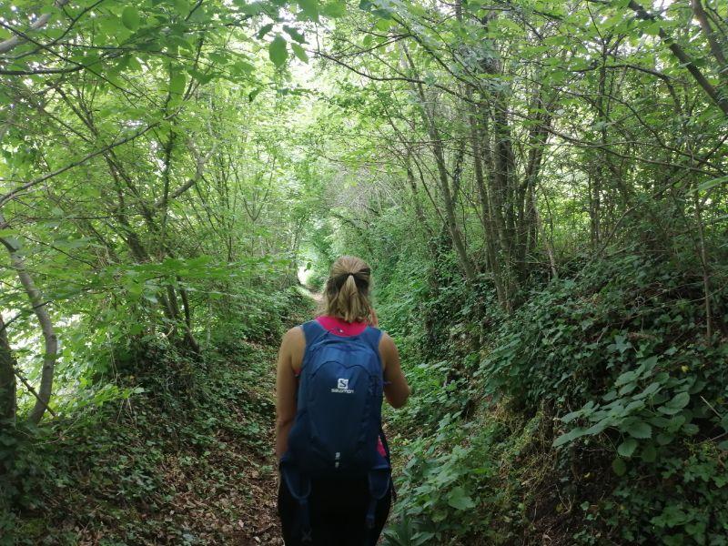 Silvia nel bosco