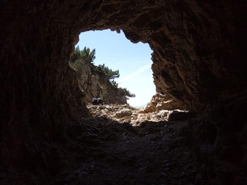 Scorci sentiero 52 gallerie con cane