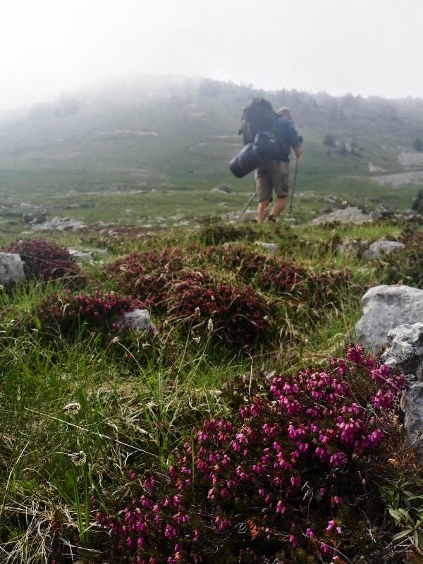 Davide tra fiori e nebbia