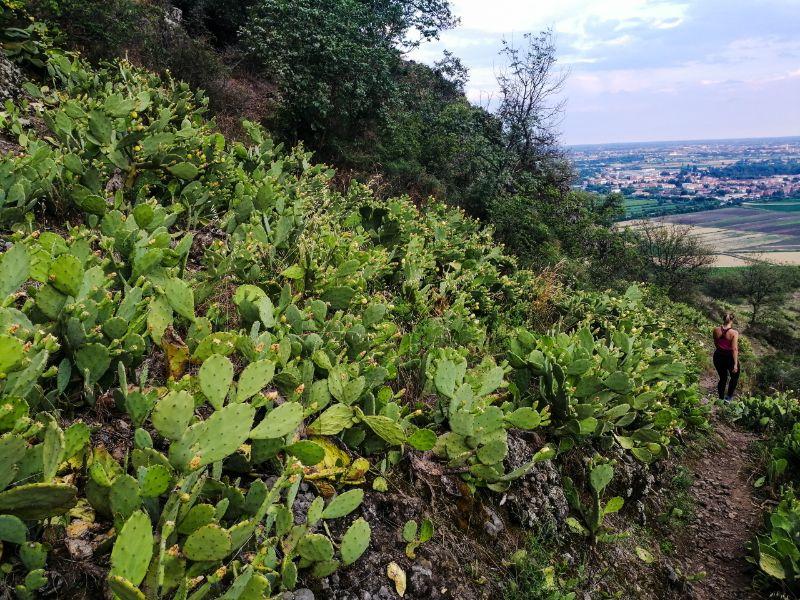 trekking sul Monte Ceva