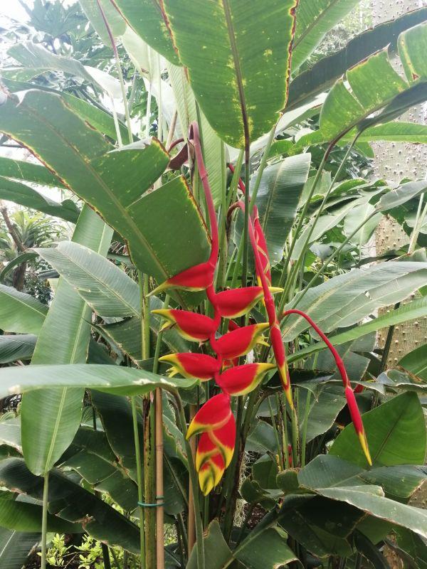 Piante tropicali nei giardini di Padova