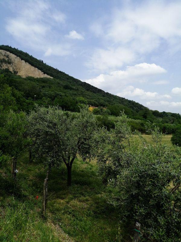versante del Monte Ricco, trekking dalla stazione