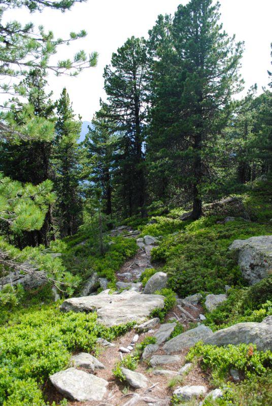 Distesa di mirtilli in bosco