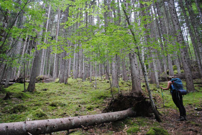 Silvia in bosco verso Bivacco Tiziano