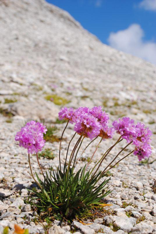 fioriture nel mondo di roccia