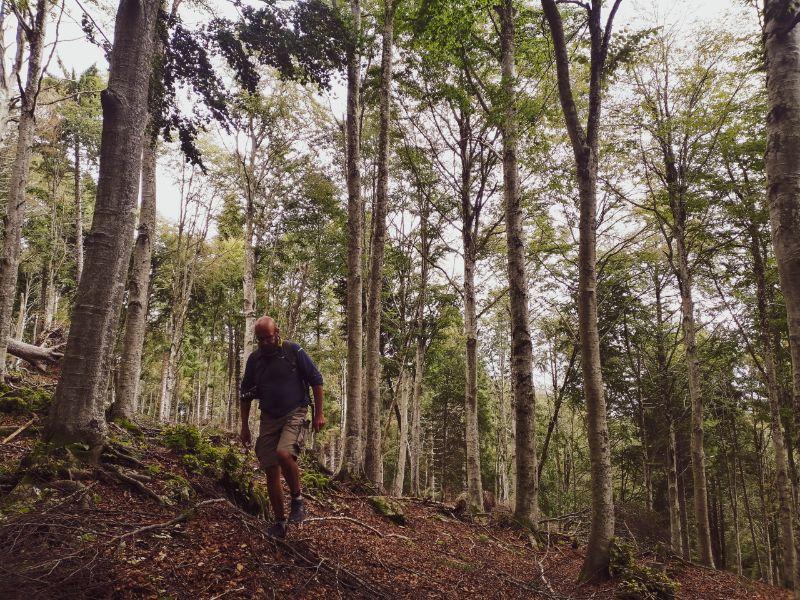 Davide nel bosco del Pian del Cansiglio