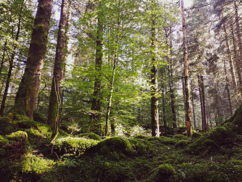 bosco del Pian del Cansiglio