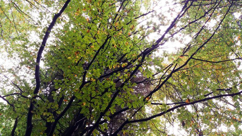 Foliage e bramiti di cervi nel Cansiglio