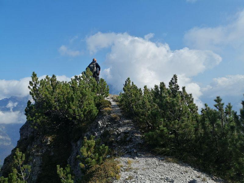 Davide tra i mughi nell'anello di cima de l'albero
