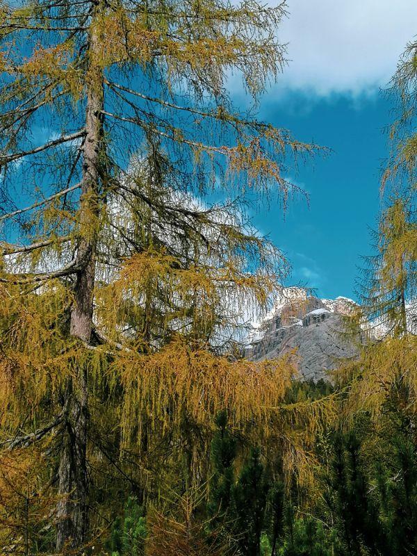Larici della Val Noana