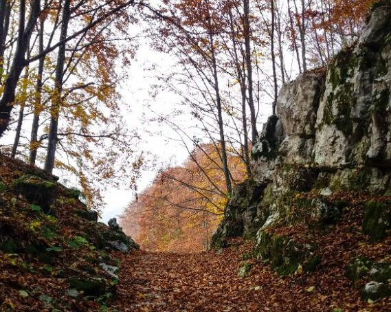 sentiero calà del sasso Asiago