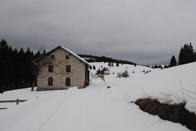 Bisele in inverno