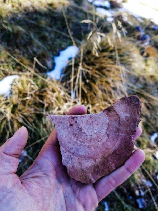 fossili del Monte Fior