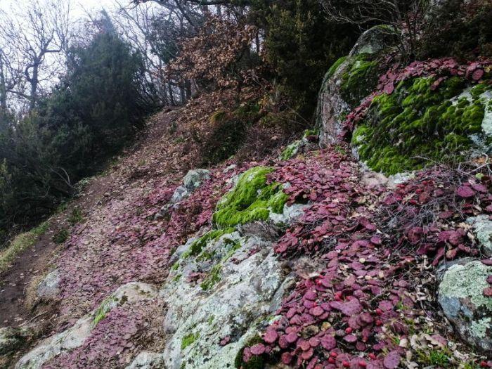 Sentiero Alpini Monte della Madonna